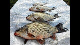 Рыбалка озеро Сунгуль .