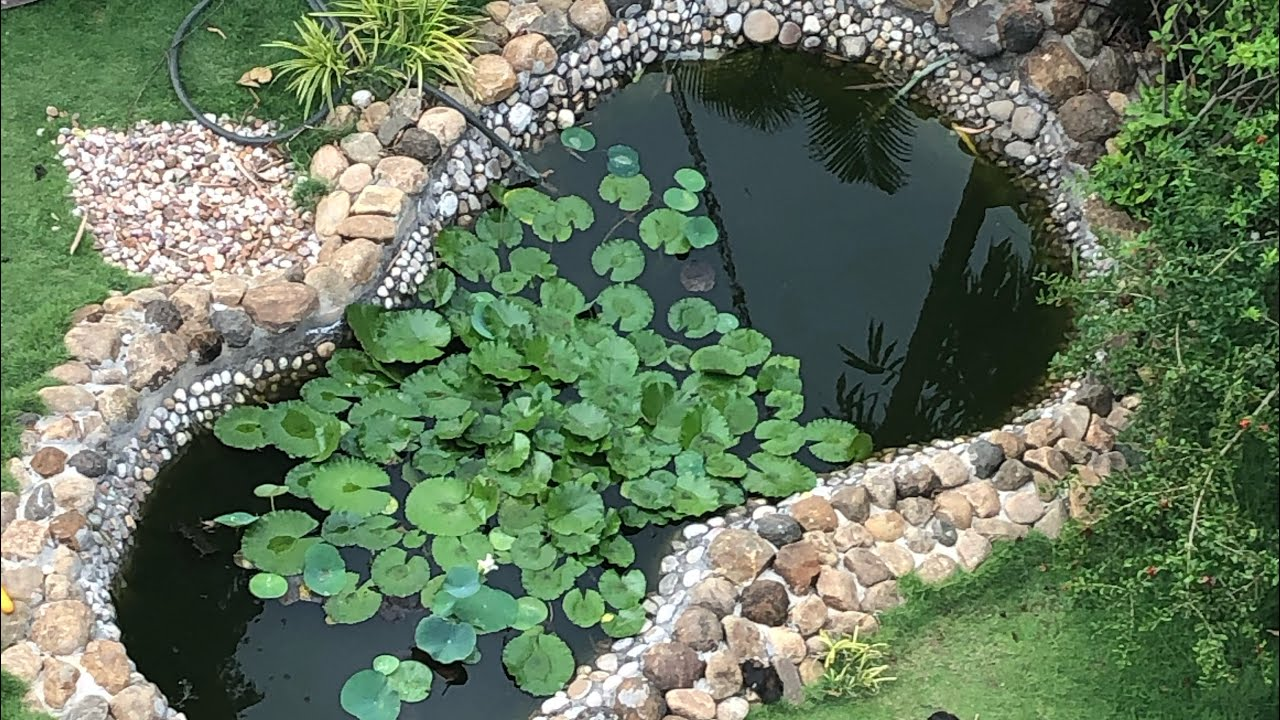 My front yard KOI POND - YouTube on Front Yard Pond  id=48724