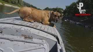 Собака - на лодке гоняка!!!) [Рыбачёв и Пёс НЕИЗДАННОЕ]