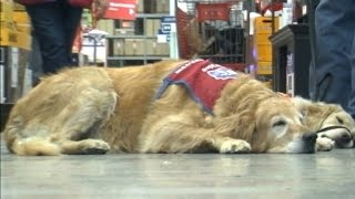 Lowe's hires a veteran and his service dog