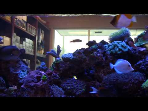 Marine Designs - Saltwater Aquarium Store Atlanta