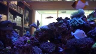 Marine Designs - Saltwater Aquarium Store Atlanta