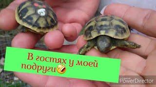 А черепахи бывают кусачие😂