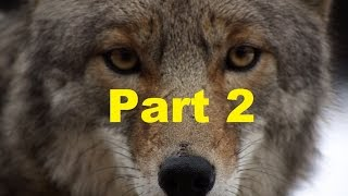 Make Your Property Predator Proof ~ Keeping Predators Out~ Part 2