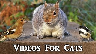 Videos for Cats to Watch : Bird Sounds and Squirrels Extravaganza