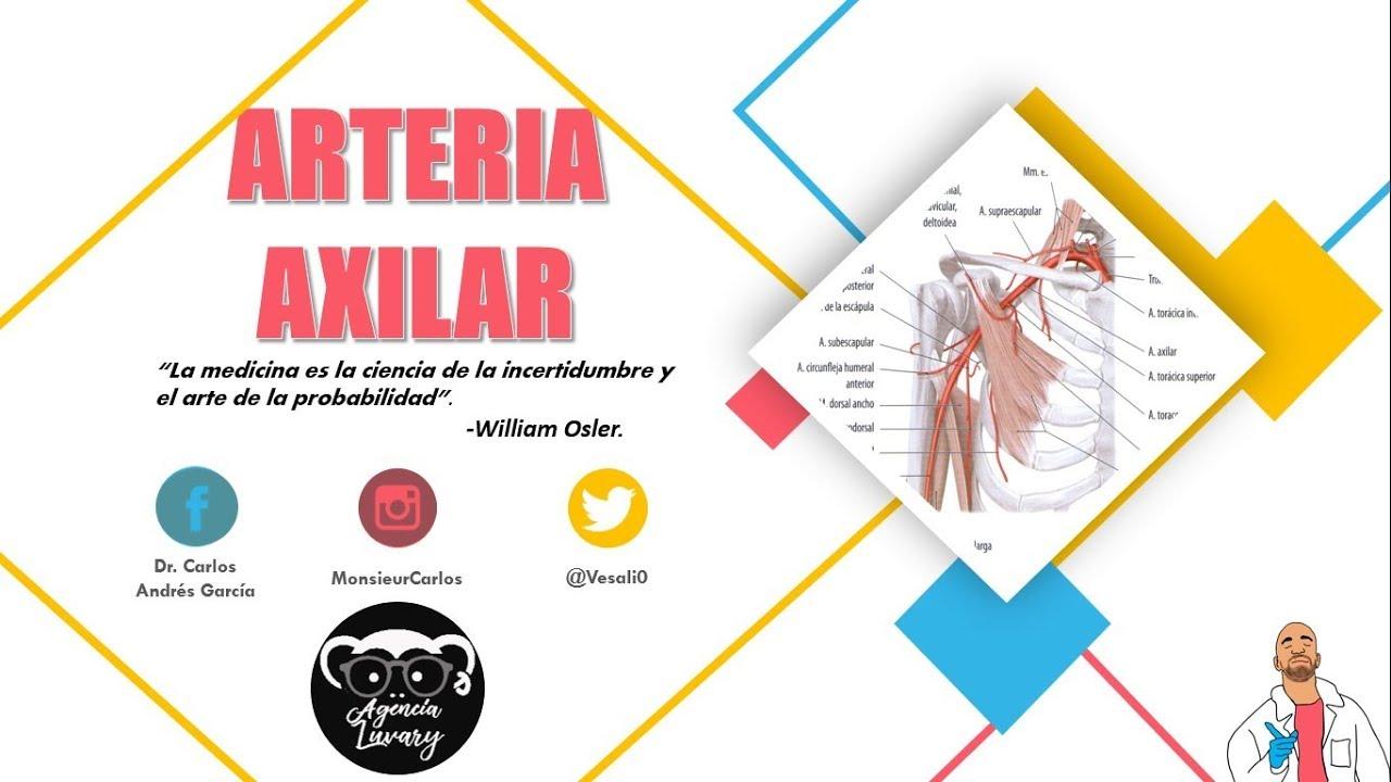 Anatomía - Arteria Axilar (Origen, Trayecto y Relaciones ...