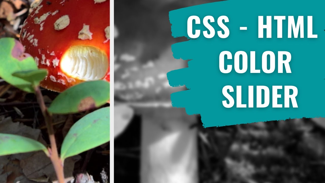 Image Slider Color Filter Using HTML and CSS