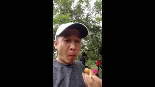 Du lịch Sinh Thái - Tham Quan Vườn Nhãn - Hòa Thành - Tây Ninh