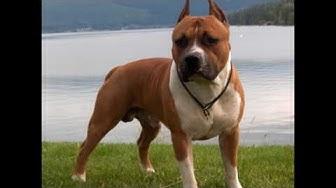 10 Най-опасни кучета в света (TOP)new