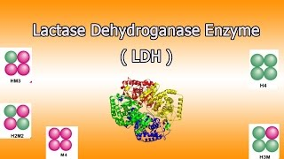Lactate dehydrogenase enzyme    ( Clear Over View )
