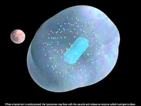 Cell Locomotion and Phagocytosisavi - YouTube