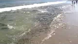 Bluefish blitz at the Jersey Shore, October 2007