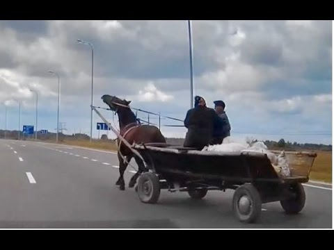 Horse Crash Compilation / Horse attack on the road