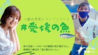 ★愛媛の旅×八幡浜漁港★旬を迎える#愛媛の魚 特集♪《四国》
