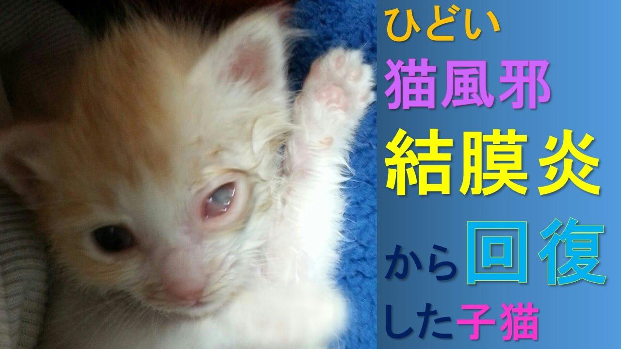 結膜炎 猫