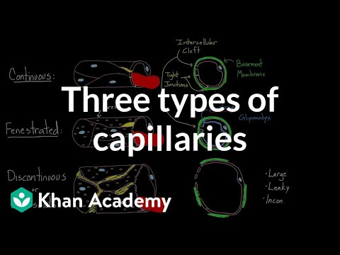 Three types of capillaries | Circulatory system physiology | NCLEX-RN | Khan Academy