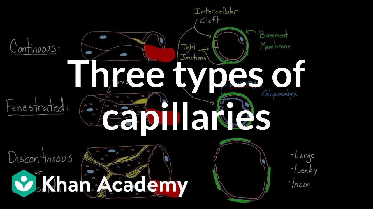 capilares descontínuos