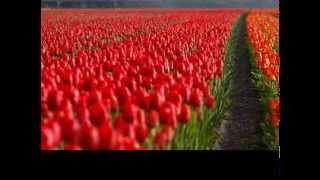 Poema con un mensaje de vida de JL Borges: Y uno aprende Thumbnail