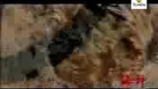 Dengiz hukumdori 9 qism uzbek tilida