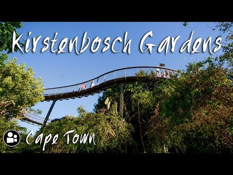 Kirstenbosch Botanical Gardens | Things to do in Cape Town