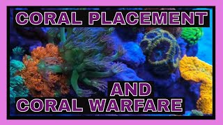 Placing Coral In A Reef Tank - Coral Warfare