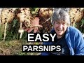 PARSNIPS How To Grow Parsnips (Winter Vegetable) 2019