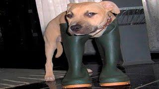 Кошки и Собаки в Ботинках - Смешные Животные и Обувь