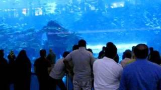DUBAI Mall  аквариум. самый большой аквариум(Ну ооочень большой магазин в Дубаи. ОАЭ. и в нем самый большой аквариум с огромными акулами и всякой живност..., 2009-08-04T16:49:48.000Z)