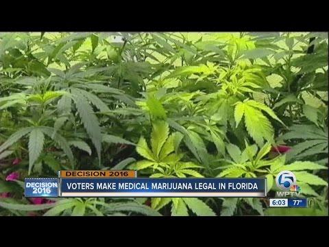 Voters make medical marijuana legal in Florida