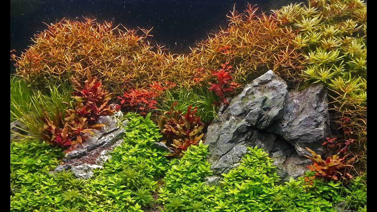 How to grow : Background stem plants in a planted tank - YouTube