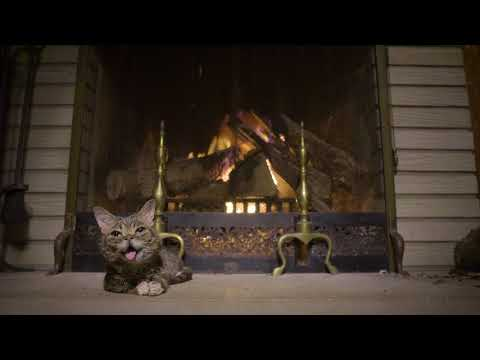 Lil BUB's Extraordinarily Magical Yule Log Video 2017