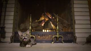 Lil BUB's Extraordinarily Magical Yule Log Video 2017 thumbnail