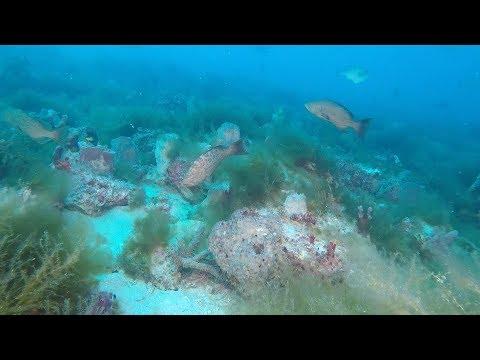 Diving West Coast Florida Hard Bottom Ledges and Reefs - Grouper, Snapper, Amberjack Fishing
