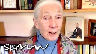 – Don't blame the bats for the Coronavirus | Dr. Jane Goodall | SVT/TV 2/Skavlan