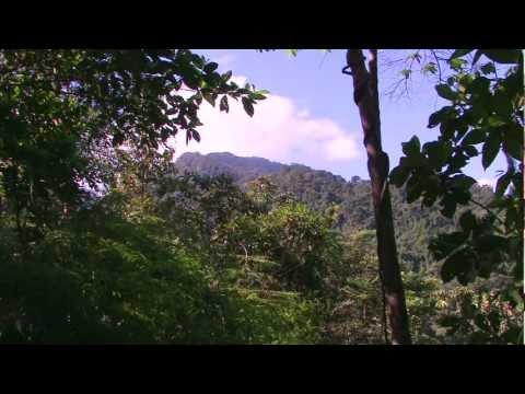 Introducing the Wonderful Birds of Pico Bonito, Honduras [Part 1/3]