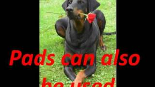 Dog Training Pads-Potty Train in 7 Days