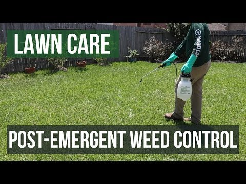 Post-Emergent Weed Control: A Lawn Care Guide
