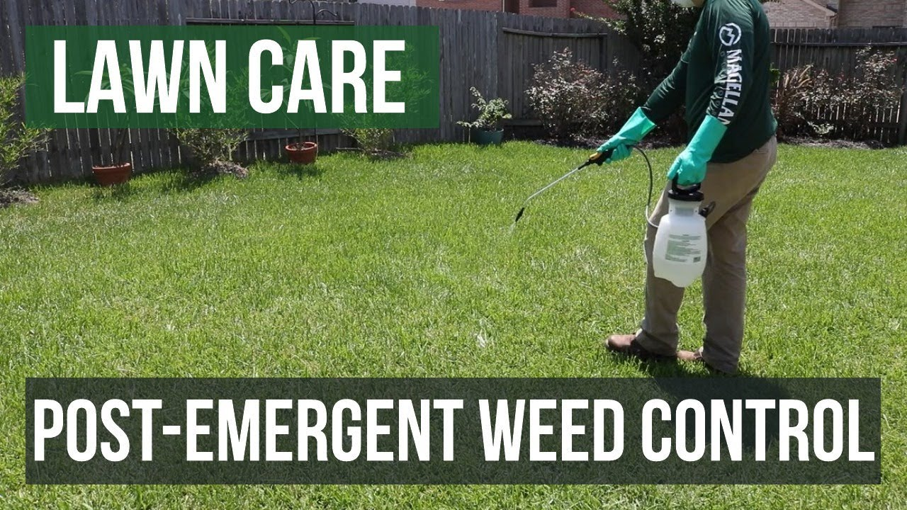 Post Emergent Weed Control A Lawn Care Guide