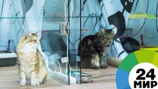 Миролюбивая собака разняла драку двух котов (ВИДЕО) - МИР 24