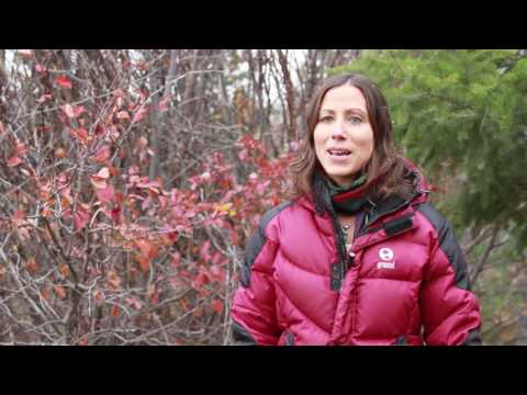 Meet Dr. Karin Riley, Research Ecologist