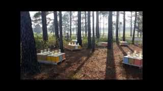 American Honey Bee Farmer - Youtube Version