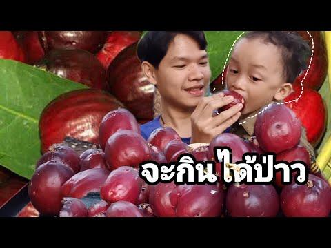 ชมพู่มะเหมี่ยว มะเหมี่ยว (จะกินได้ป่าว)