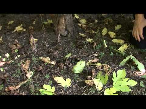 Earthworms for sustainable agriculture