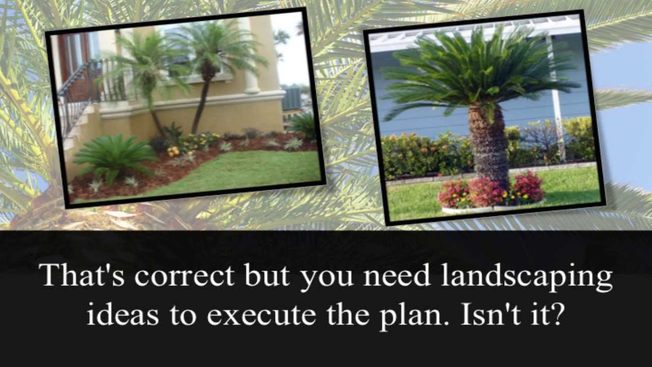 Palm Tree Landscaping Ideas - YouTube on Palm Tree Backyard Ideas id=71843