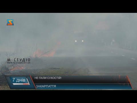Телекомпанія М-студіо: Не пали сухостій!