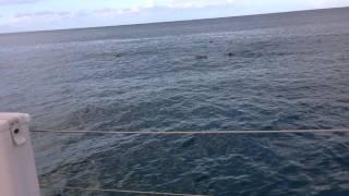 Kalika & Cornelia Double Rainbow Sunrise Dolphin Sonar Bath Magik Sea of Love