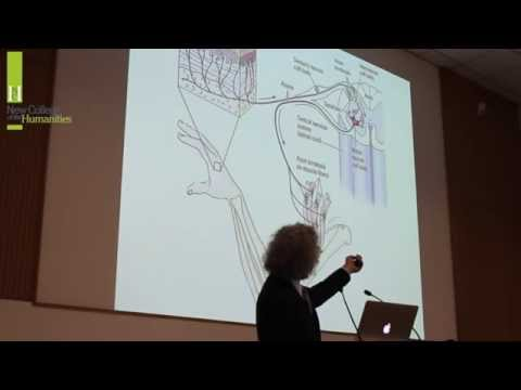 Steven Pinker on the Human Brain