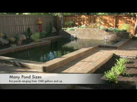 Koi fish ponds design construction equipment supplies in for Koi pond store