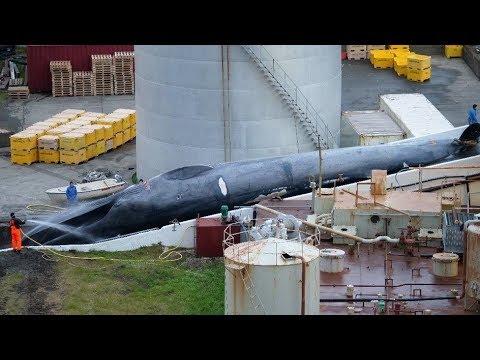 Asesinan ballena azul
