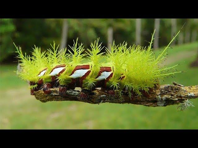 5 самых опасных насекомых мира